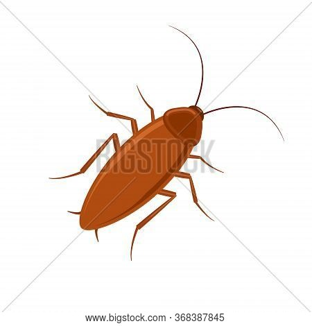 Cockroach Bug Vector Icon. Roach Silhouette Insect Black Icon Illustration Pest.