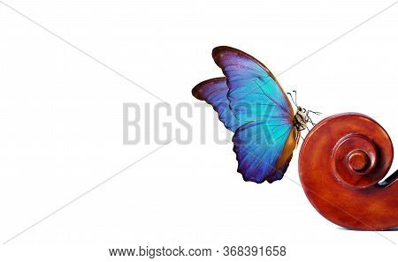 Violin Fretboard. Melody Concept. Blue Morpho Butterfly On Violin Neck Isolated On White. Music Conc