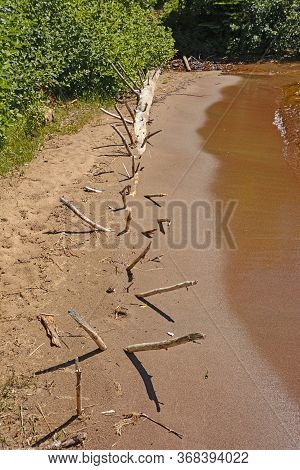 Dead Tree Buried On A Sandy Shore On Middlebrun Bay On Lake Superior In Sleeping Giant Provincial Pa