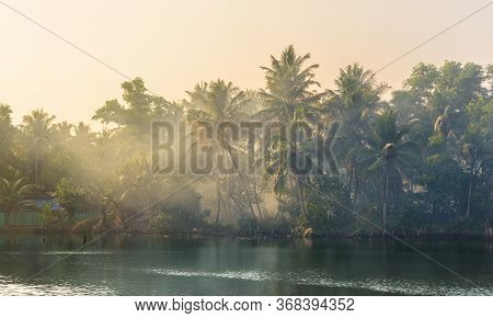 Jungle Of Palm Trees With Atmospheric Haze At Sunset, Along A Freswater Lake In Eramalloor Backwater