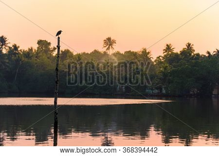 A Fishing Bird Stands On A Stilt On Kerala's Backwater Lakes, In A Tropical Jungle Popular For Yoga