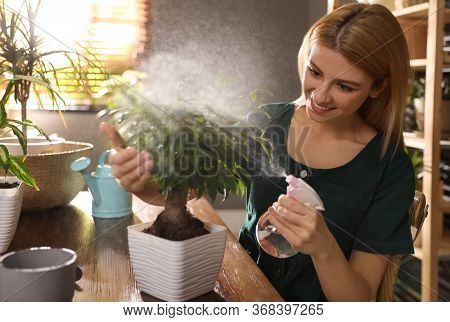 Young Woman Spraying Ficus Plant At Home. Engaging Hobby