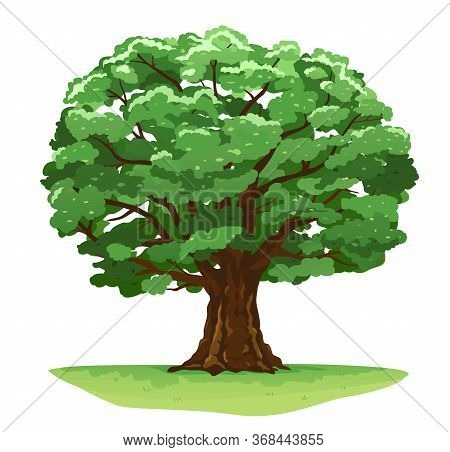 One Wide Massive Magic Old Oak Tree With Green Leaves On Green Grass Isolated Illustration, Majestic