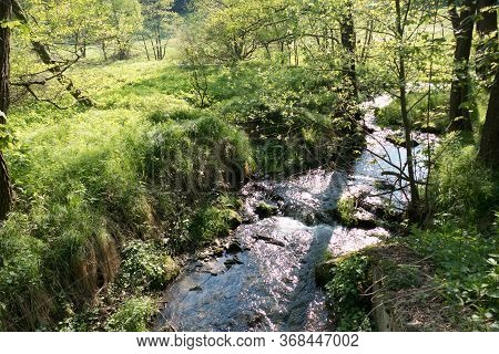 Stream Of Pure Water In The Forest