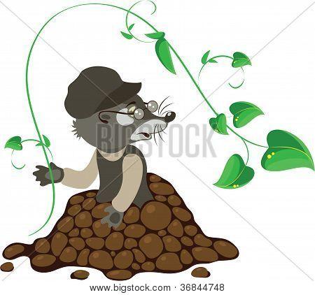 Mole, Vector Illustration