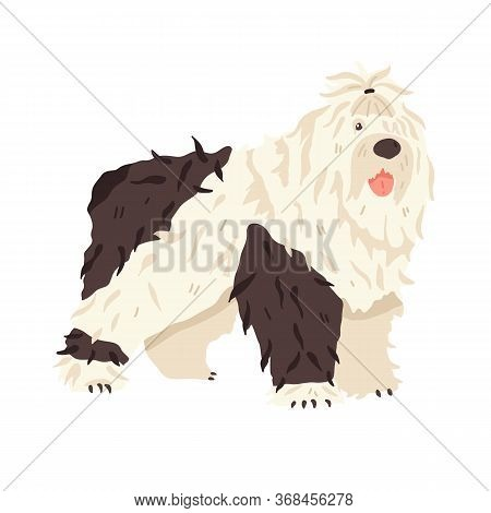 Cute Big Dog Bobtail. Animal Flat Vector Illustration. Long Haired Breed Pet Grooming Fan. Good For