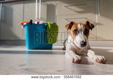 A Smart, Calm Puppy Lies Next To A Blue Bucket Of Cleaning Products In The Kitchen. A Set Of Deterge