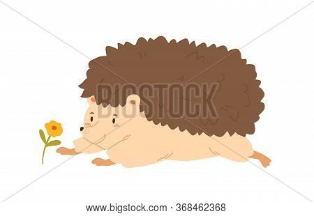 Funny Hedgehog Crawling To Flower Vector Flat Illustration. Cute Forest Animal Having Fun Admiring P