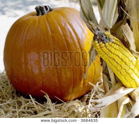 Close-Up Of Pumpkin And Corn
