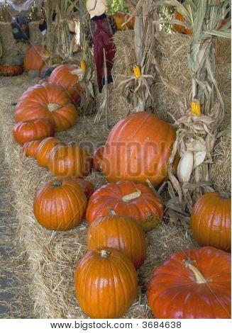 Halloween Row Of Pumpkins