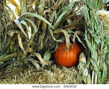 Pumpkin Almost Hidden In The Stocks And Hay