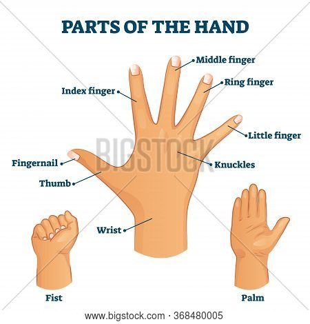 Parts Of The Hand Vocabulary Vector Illustration. Labeled Palm Structure With Names To Arm Fingers A