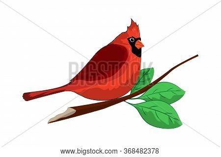 Illustration Of A Cute Red Cardinal Sitting On A Branch. Illustration Isolated On A White Background