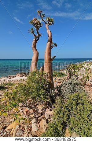 Socotra, Yemen. Africa