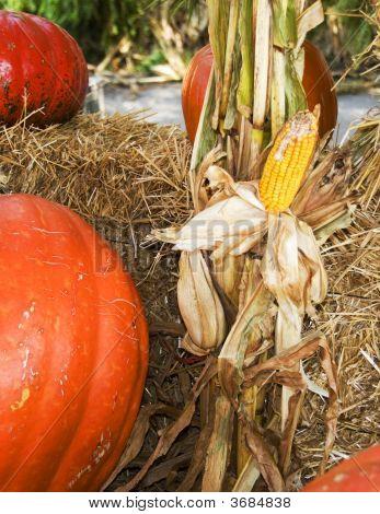 Halloween Pumpkins And Corn