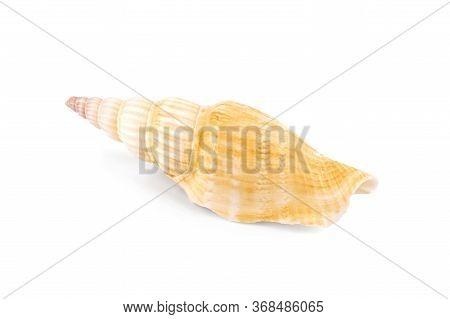 Big Bright Seashell On The White Background. Seashell In Close-up Isolated On A White Background.