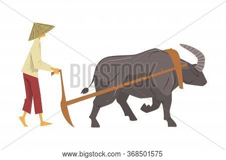 Asian Farmer In Straw Conical Hat Plowing With Oxen, Male Peasants Character Working On Paddy Field