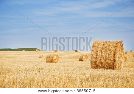 harvested field with straw bales in summer poster