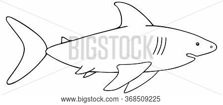 Shark. Vector Illustration. Outline On A White Isolated Background. Large Predatory Sea Fish. Hand D
