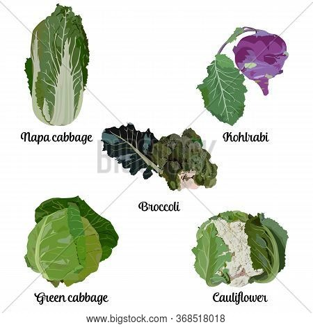 Cabbage Types Set, Vector Isolated Illustration. Green Or White Cabbage, Broccoli, Cauliflower, Kohl