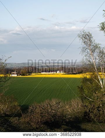 Farmland With Farm Building, Yellow Canola Fields, Green Crop Fields During Spring In Southern Swede