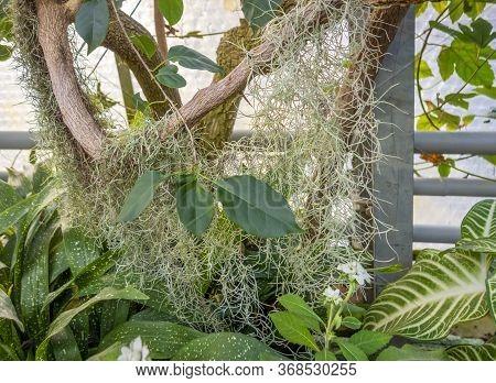 Tillandsia Plant And Other Vegetation Around Wooden Boughs