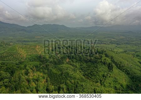 Aerial view of oil palm and rubber tree plantations