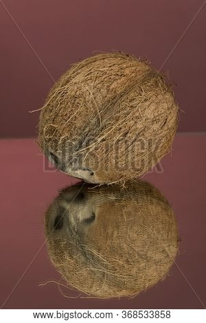 Large Shaggy Coconut Isolated On A Red Mirror Surface With Reflection. Coconut On Red.