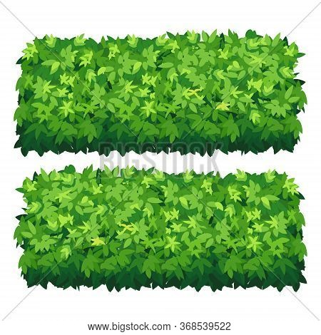 Vector Garden Bush Isolated Shrub Hedge. Green Bush Cartoon Grass Shrubbery Plant.