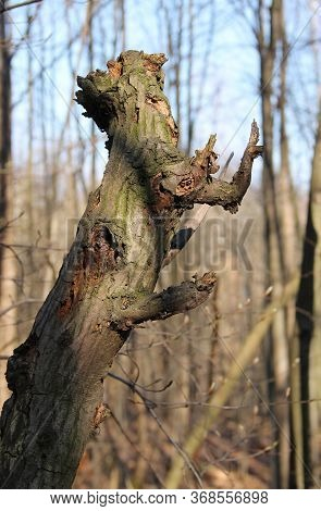 Stub Of A Branch Of A Tree