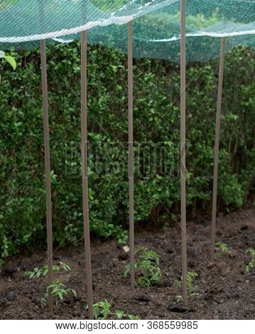 Storm Of Hail In A Vegetable Garden And Protection Net