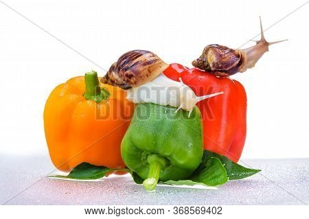 Snail. A Snail For The Design Of A Healthy Lifestyle. Organic Peppers. Isolated Fresh Peppers. Close
