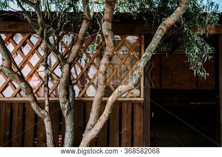 Background With A Tree Trunk And A Wooden Arbor In The Open Air, Concept Of Outdoor Recreation. Back