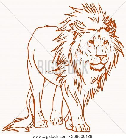Drawing Or Sketch Of Male Lion Standing Outline Editable Vector Illustration