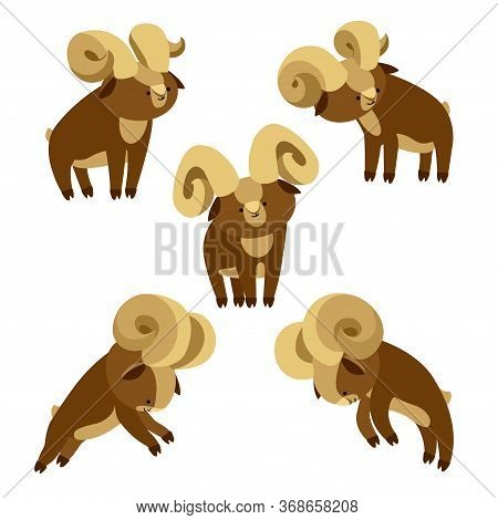 Set Of A Young Brown Horned Argali Males, Simple Cute Character, Decorative Ornament, Icon, Emblem,