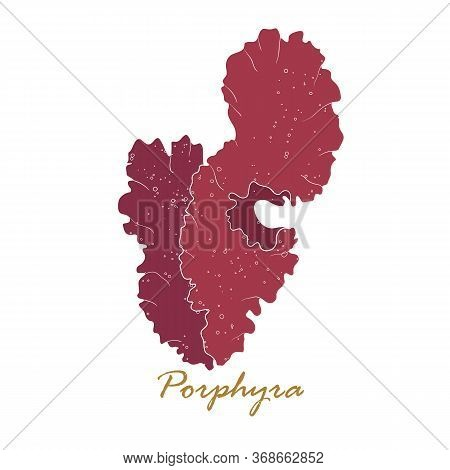 Porphyra Seaweed. Red Algae. Edible Seaweed Collection. Vector Hand Drawn Illustration Isolated On W