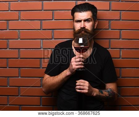 Sommelier With Confident Face Drinks Red Cabernet Or Merlot