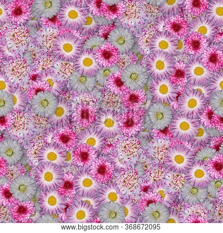 Texture Of A Seamless Pattern With Colors. Pink Daisies. Decorative Design Elements