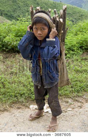 Child Transports Firewood, Laos
