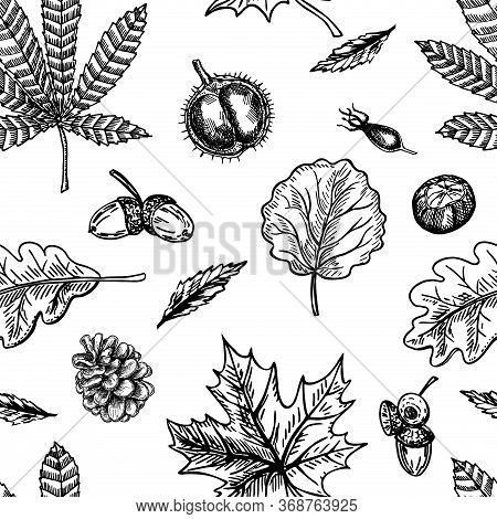 Autumn Seamless Pattern With Leaf, Autumn Leaf Background. Cute Backdrop. Leaf Fall. Autumn Leaves,