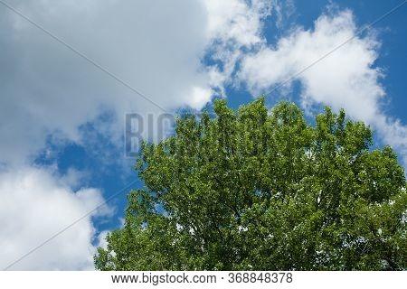 Closeup Shot Of Green Tree Under The Blue Sky And White Clouds