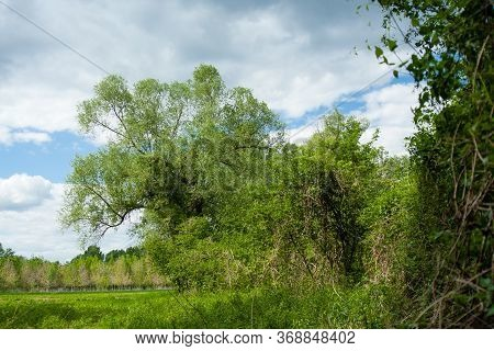 Green Wood And Blue And White Sky