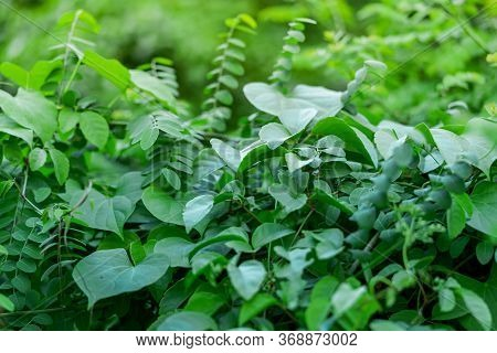Photos Of Green Bushes On Leaky Walls And Sunlight