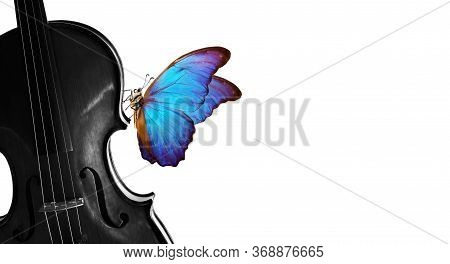 Melody Concept. Colorful Blue Morpho Butterfly On Violin. Violin Black And White And Bright Butterfl