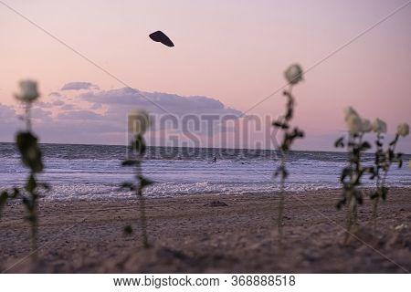 Funeral Flower, Lonely Red Rose Flower At The Beach, Water Background With Copy Space, Burial At Sea
