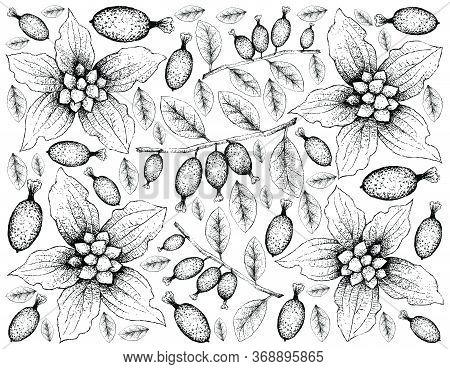 Berry Fruit, Illustration  Hand Drawn Sketch Of Dwarf Dogwood Or Cornus Canadensis And Elaeagnus Lat