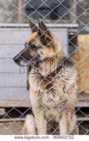East European Shepherd In A Cage Looks Away. Big Dog In The Aviary. Watchman And Friend. Blurred Bac