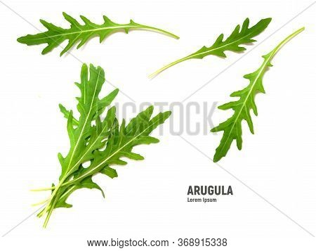 Green Fresh Leaf Rucola Or Arugula Isolated On White Background