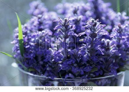 Ajuga Reptans Or Bugle, Blue Bugle. Blue Flowers With A Green Blade Of Grass In A Glass Vase Close U