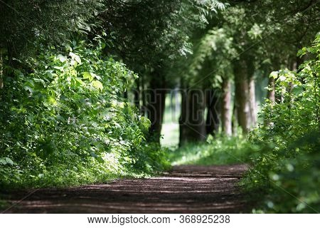 Trail Path In The Green Forest Park, Tourism And Hiking Trips Outdoors
